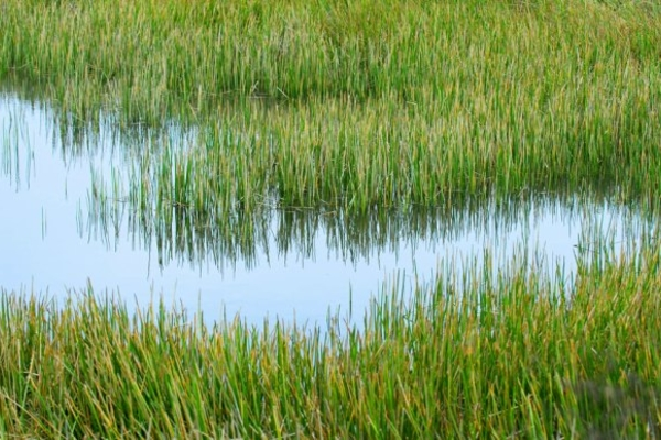 Cleaning up: how artificial reed beds are helping to solve unsavoury sewage side effects