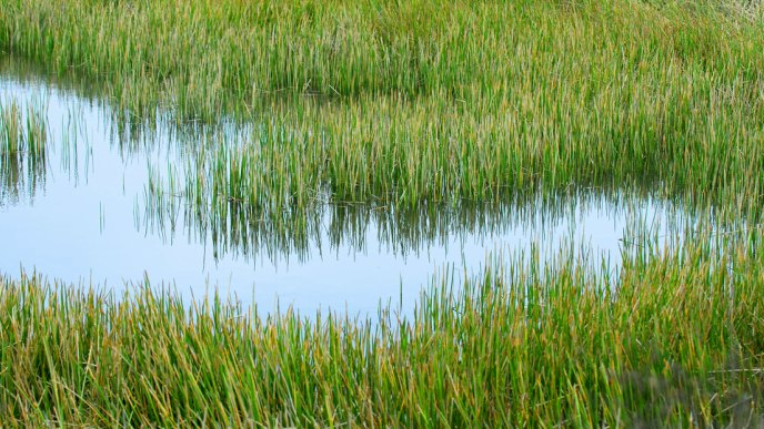 how artificial reed beds are helping to solve unsavoury sewage side effects